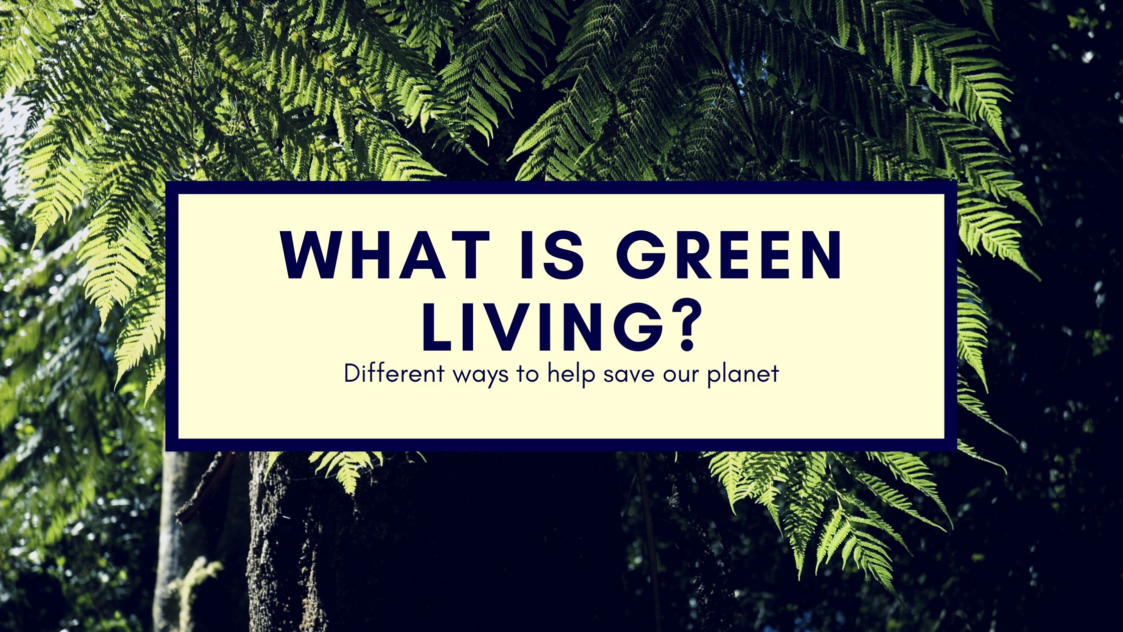 Green living and eco-friendly lifestyle options