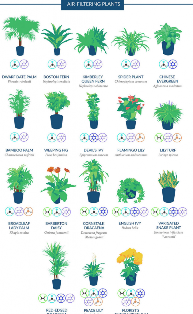 best-air-filtering-plants-to-have-at-home-for-better-air-quality
