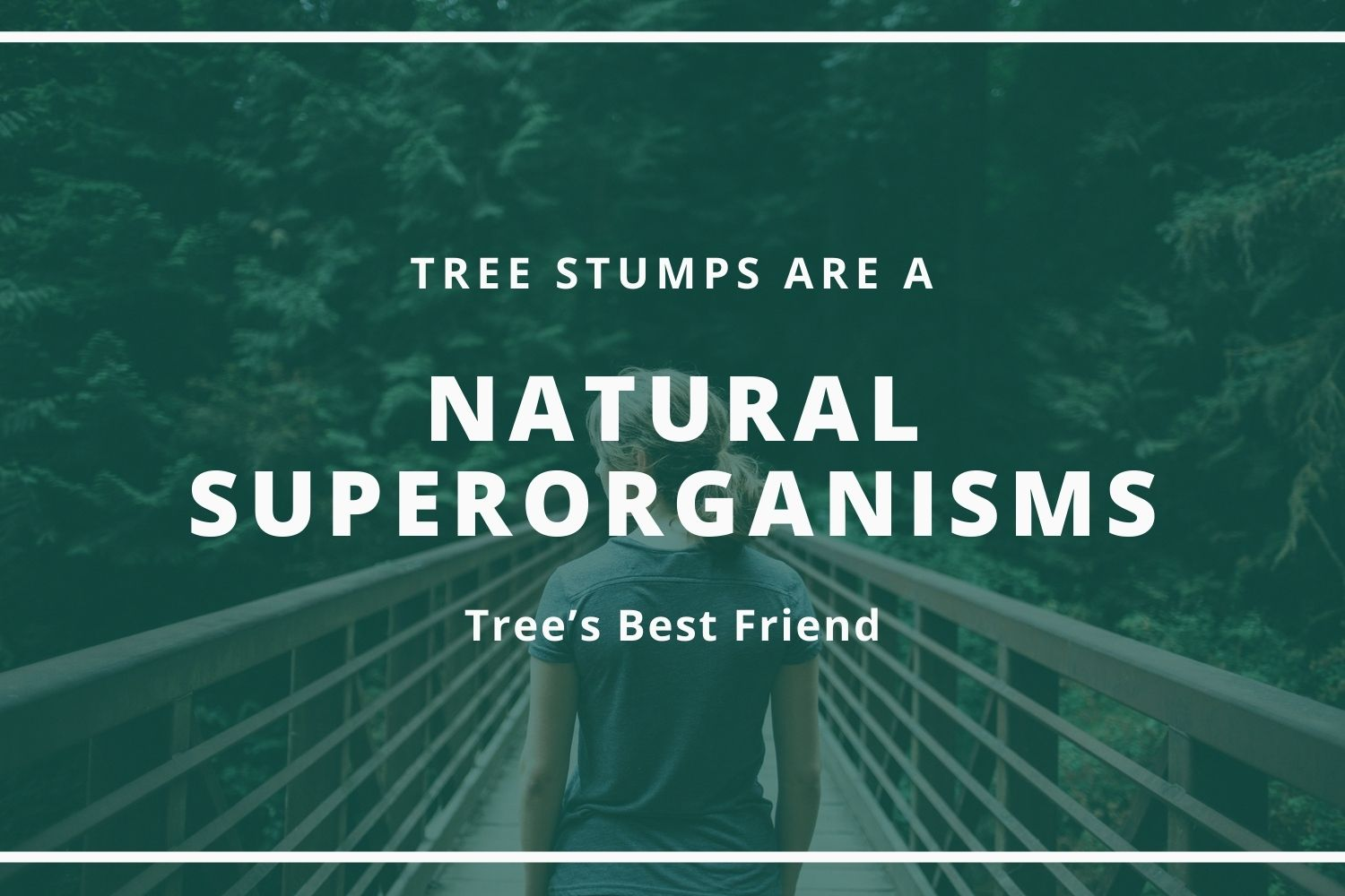 Tree Stumps Are A Tree's Best Friend – Natural Superorganisms