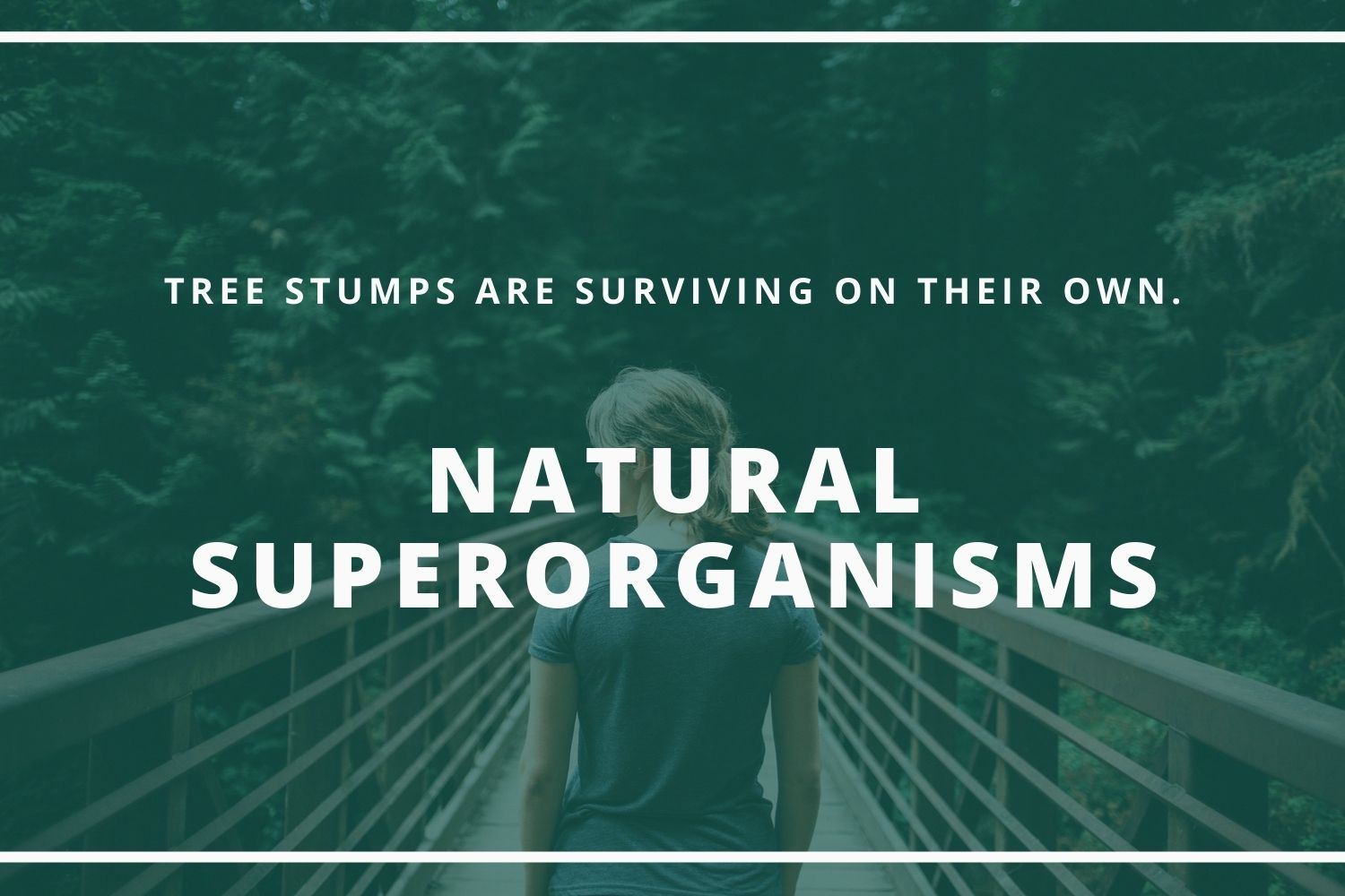 Tree Stumps Are A Tree's Best Friend_ Natural Superorganisms