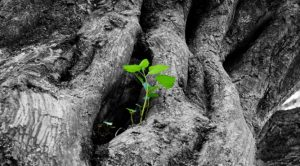 Uncovering the Mysteries of Tree Life in the Future - Natural Superorganism