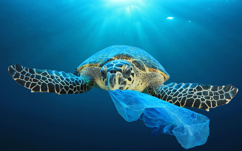 The Green Turtle plastic-free toiletries