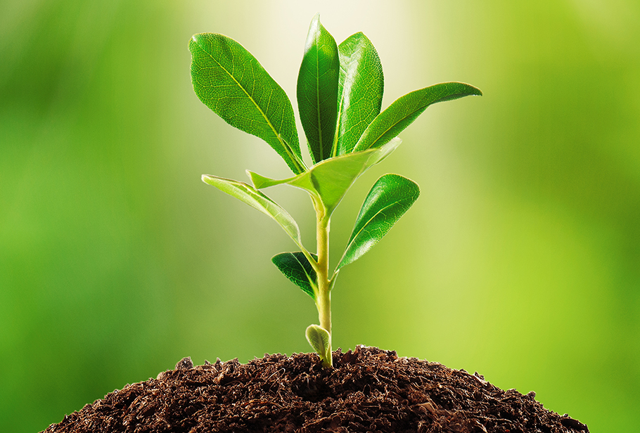 Plants help to clean the Air