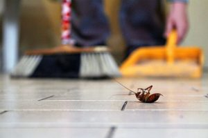Natural Control Measures to eliminate Pests at home